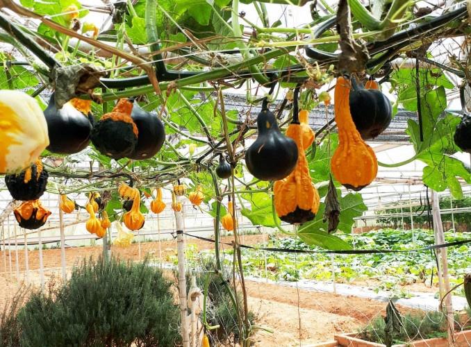 nơi bán trái cây Bảo Lộc tại tphcm
