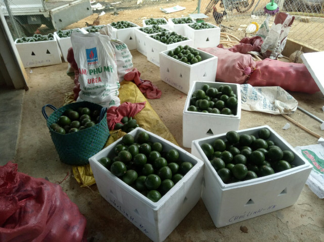 nông sản sạch Bảo Lộc