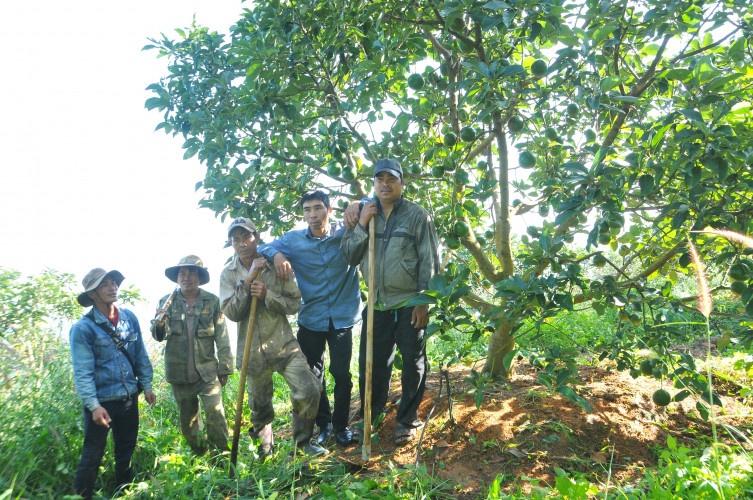 trái cây sạch Lâm Đồng